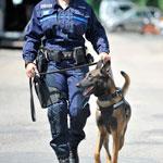 formation cynotechnicien securite publique severine lesourd